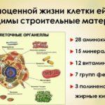 Философия клеточного сбалансированного питания - научный подход.